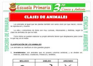 Ficha de Clases de Animales para Tercero de Primaria