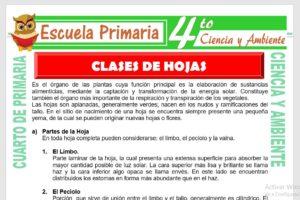 Ficha de Clases de Hojas para Cuarto de Primaria
