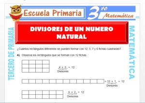 Ficha de Divisores de un Número Natural para Tercero de Primaria