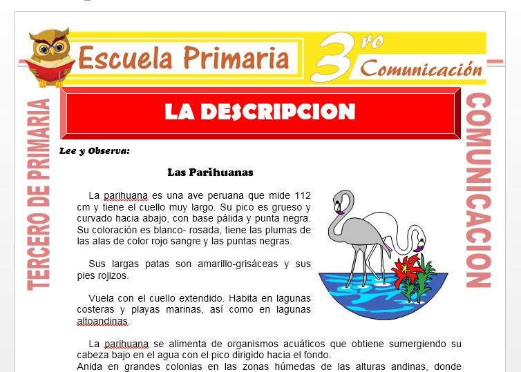 Ficha de Ejemplo de Descripción para Tercero de Primaria