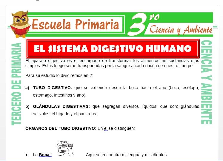 Ficha de El Sistema Digestivo Humano para Tercero de Primaria