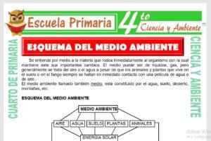 Ficha de Esquema Del Medio Ambiente para Cuarto de Primaria