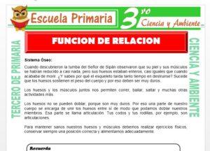 Ficha de Funcion de Relación para Tercero de Primaria