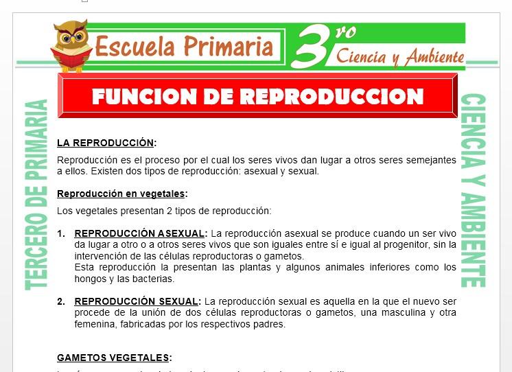Ficha de Funcion de Reproducción para Tercero de Primaria