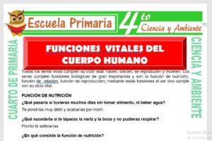 Ficha de Funciones Vitales del Cuerpo Humano para Cuarto de Primaria