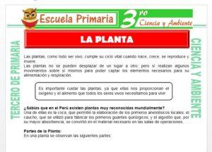 Ficha de La Planta para Tercero de Primaria