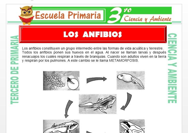 Ficha de Los Anfibios para Tercero de Primaria
