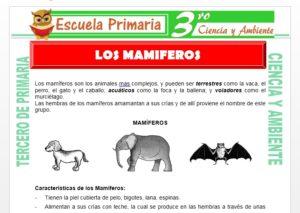 Ficha de Los Animales Mamiferos para Tercero de Primaria