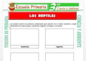 Ficha de Los Reptiles para Tercero de Primaria