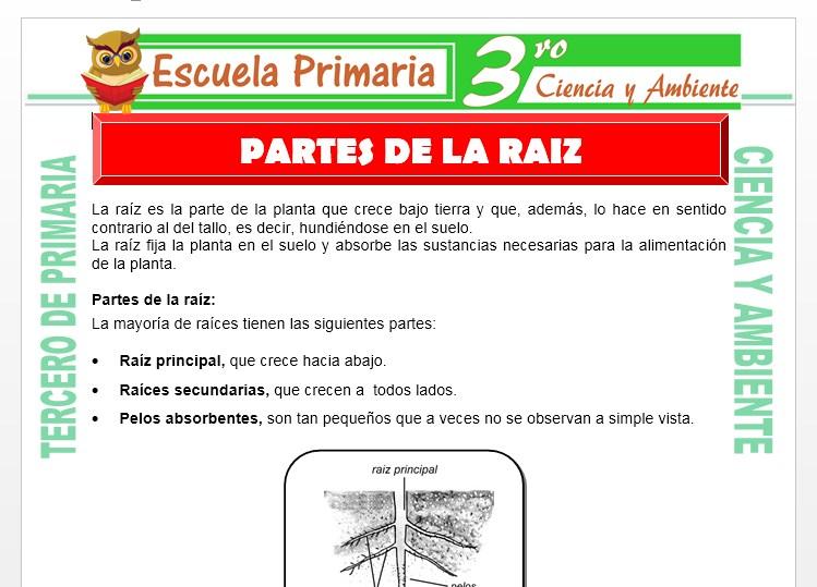 Ficha de Partes de la raiz para Tercero de Primaria