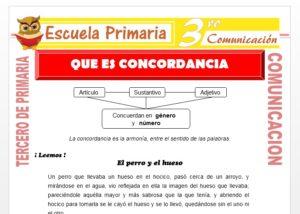 Ficha de Que es Concordancia para Tercero de Primaria