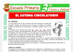 Ficha de Que es el Sistema Circulatorio para Tercero de Primaria