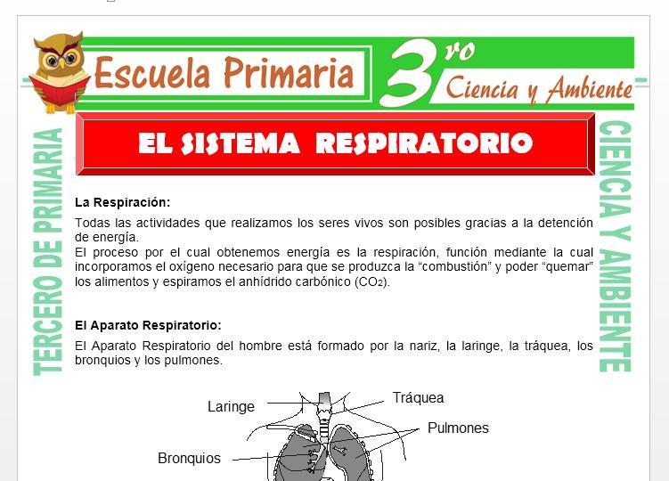 Ficha de Que es el Sistema Respiratorio para Tercero de Primaria
