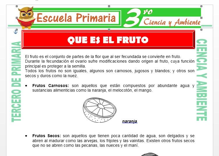 Ficha de Que es el Fruto para Tercero de Primaria