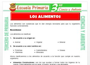 Ficha de Que son los Alimentos para Tercero de Primaria