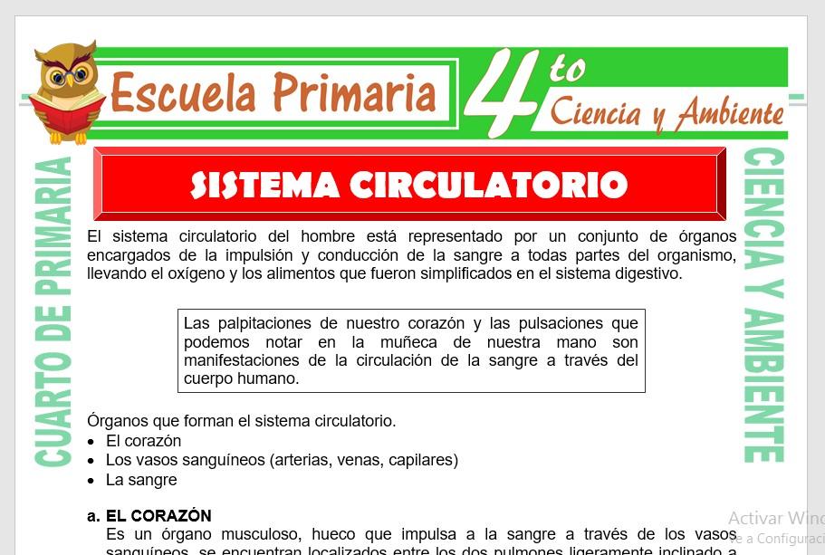 Ficha de Sistema Circulatorio para Cuarto de Primaria