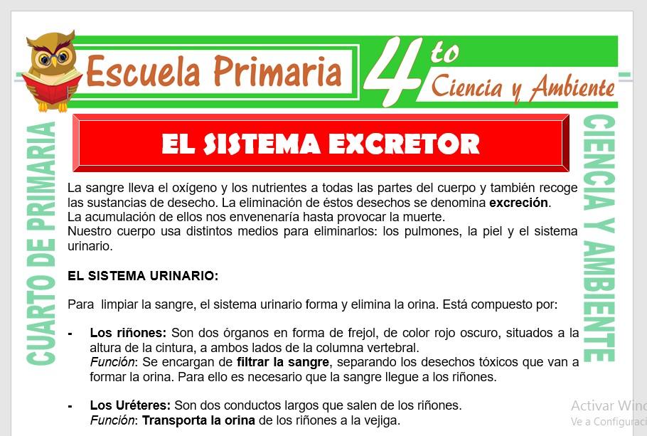 Ficha de Sistema Excretor para Cuarto de Primaria