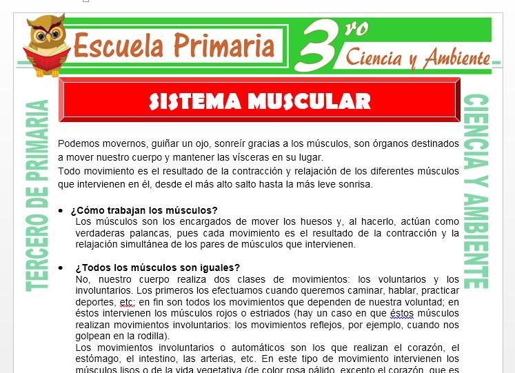 Ficha de Sistema Muscular para Tercero de Primaria