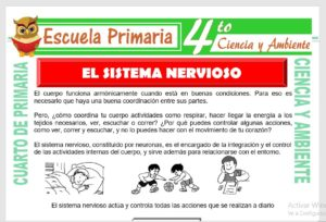 Ficha de Sistema Nervioso para Cuarto de Primaria