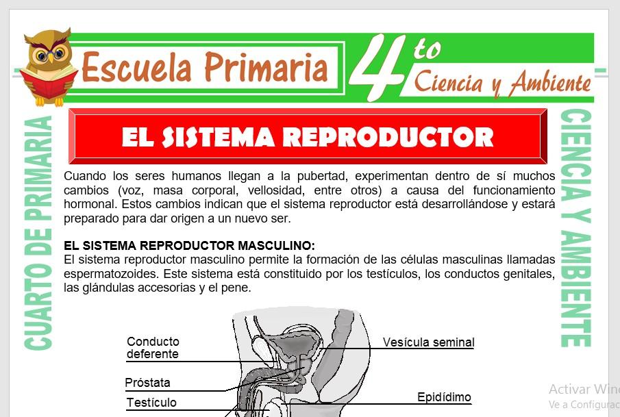 Ficha de Sistema Reproductor Masculino y Femenino para Cuarto de Primaria