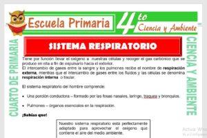 Ficha de Sistema Respiratorio para Cuarto de Primaria