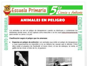 Modelo de la Ficha de Animales en Peligro para Quinto de Primaria