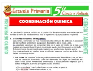 Modelo de la Ficha de Coordinación Química para Quinto de Primaria