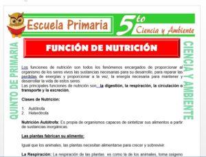 Modelo de la Ficha de Función de Nutrición para Quinto de Primaria