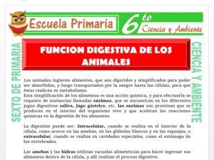 Modelo de la Ficha de Función Digestiva en los Animales para Sexto de Primaria