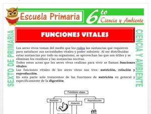 Modelo de la Ficha de Función Vital del Ser Humano para Sexto de Primaria