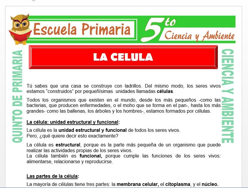 Modelo de la Ficha de La Célula para Quinto de Primaria