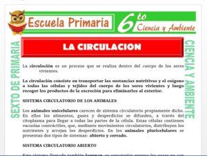 Modelo de la Ficha de La Circulación para Sexto de Primaria