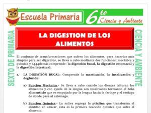 Modelo de la Ficha de La Digestión de los Alimentos para Sexto de Primaria