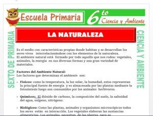 Modelo de la Ficha de La Naturaleza para Sexto de Primaria