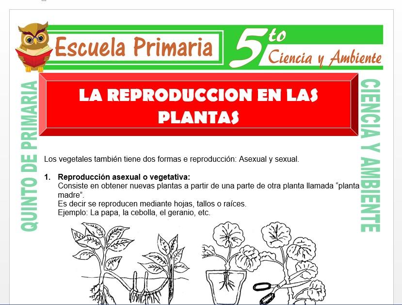 Modelo de la Ficha de La Reproducción en las Plantas para Quinto de Primaria