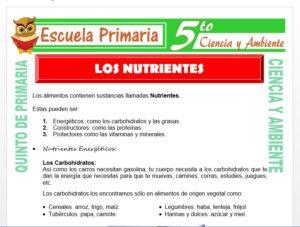 Modelo de la Ficha de Los Nutrientes para Quinto de Primaria