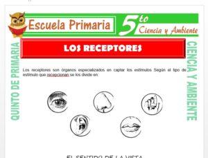 Modelo de la Ficha de Los Receptores para Quinto de Primaria