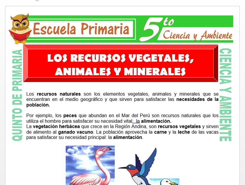 Modelo de la Ficha de Los Recursos Vegetales, Animales y Minerales para Quinto de Primaria