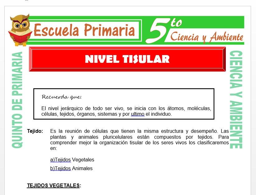Modelo de la Ficha de Nivel Tisular para Quinto de Primaria