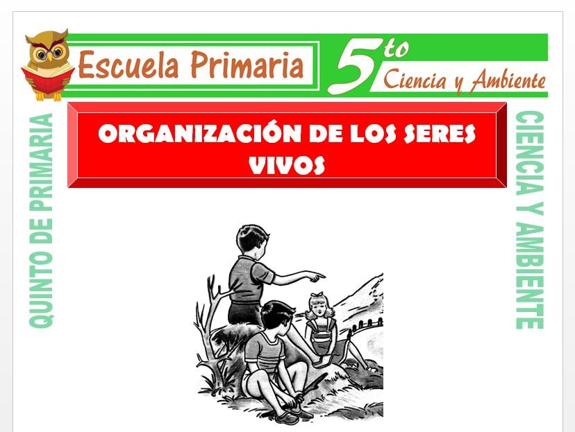 Modelo de la Ficha de Organización de los seres vivos para Quinto de Primaria