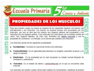 Modelo de la Ficha de Propiedades de los Músculos para Quinto de Primaria