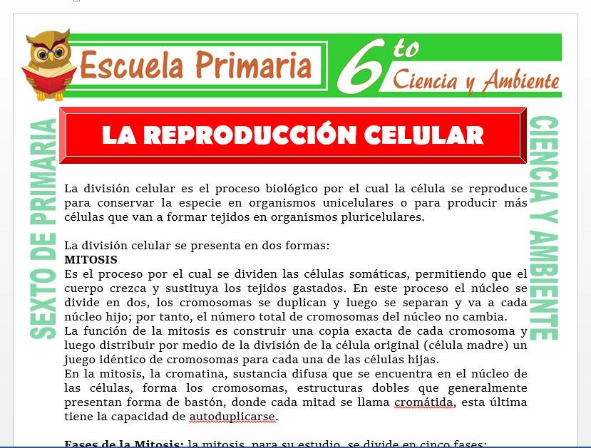 Modelo de la Ficha de Reproducción Celular para Sexto de Primaria