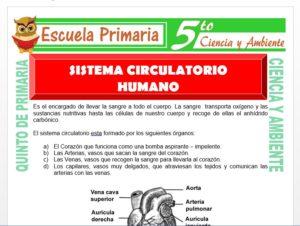 Modelo de la Ficha de Sistema Circulatorio Humano para Quinto de Primaria