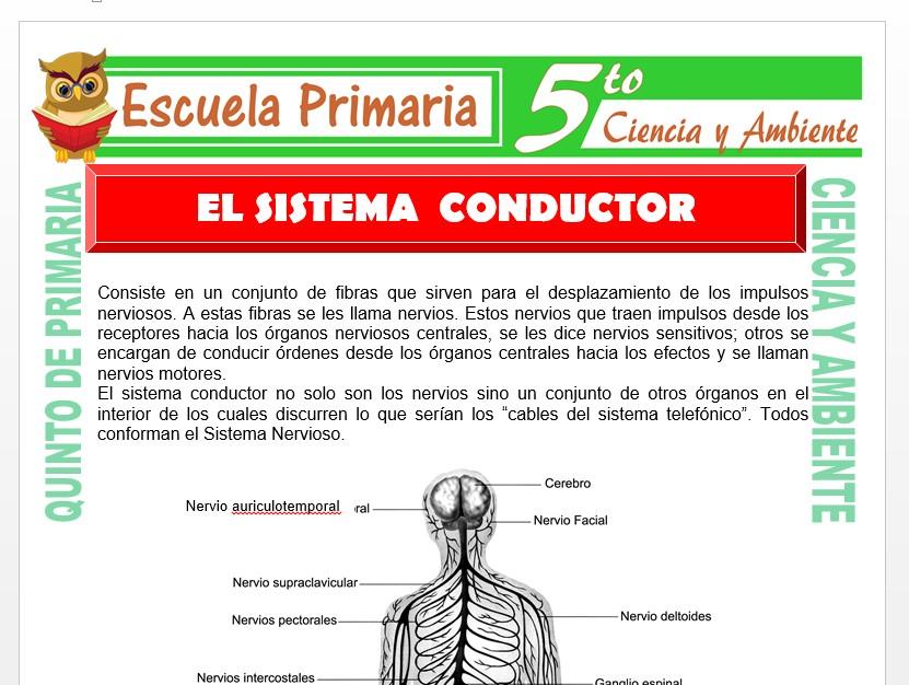 Modelo de la Ficha de Sistema Conductor para Quinto de Primaria
