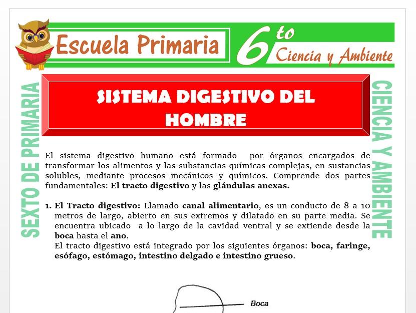 Modelo de la Ficha de Sistema Digestivo del Hombre para Sexto de Primaria
