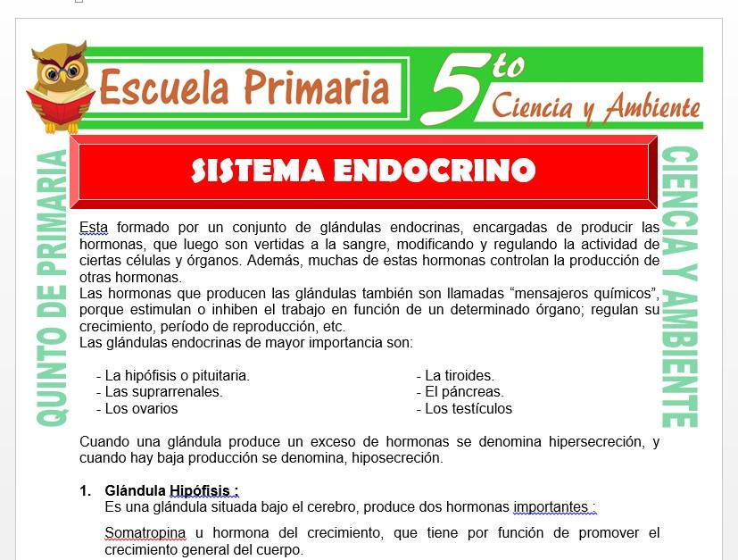 Modelo de la Ficha de Sistema Endocrino para Quinto de Primaria