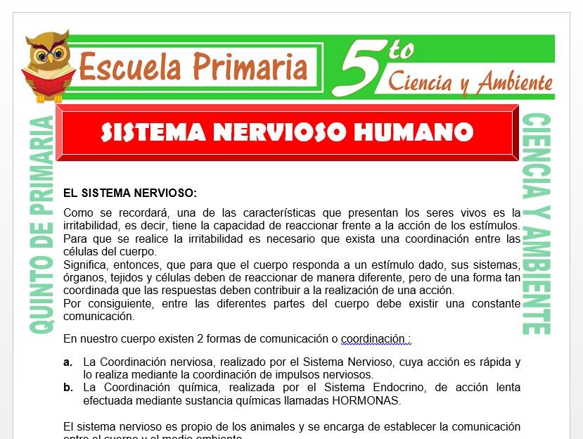 Modelo de la Ficha de Sistema Nervioso Humano para Quinto de Primaria