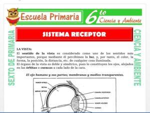 Modelo de la Ficha de Sistema Receptor para Sexto de Primaria