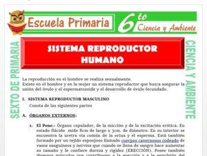 Modelo de la Ficha de Sistema Reproductor Humano para Sexto de Primaria