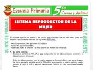 Modelo de la Ficha de Sistema Reproductor de la Mujer para Quinto de Primaria